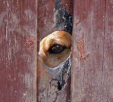 Peek-A-Boo by DarthIndy