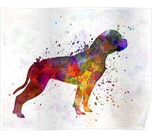 American Bulldog 01 in watercolor Poster