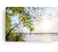 Weeping Willow Close to the River Canvas Print