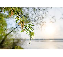 Weeping Willow Close to the River Photographic Print