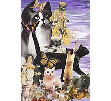 Cute Cat Collage 4 Photographic Print