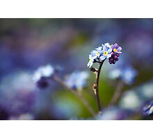 """""""Just living is not enough. One must have sunshine, freedom, and a little flower."""" Photographic Print"""