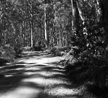Boranup Forest, Nr Margaret River, WA by Elaine Teague
