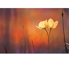 Forest Dawn Photographic Print