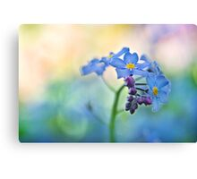 Forget Me... Not. Canvas Print