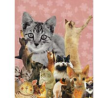 Feline Follies Photographic Print