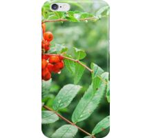 bunch of rowan with raindrops iPhone Case/Skin