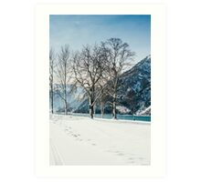Trees By The Winter Lake Art Print