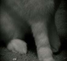 Lucky Rabbits Feet by KMorral