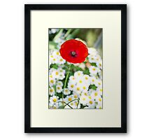 Meanwhile, in the daisies... Framed Print
