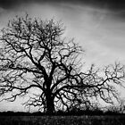 The Creepy Tree by candysfamily