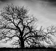 The Creepy Tree by candysfamily