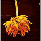 Lazy old Gebera by Lozzar Flowers & Art