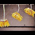 Gerbera Trio by Lozzar Flowers & Art