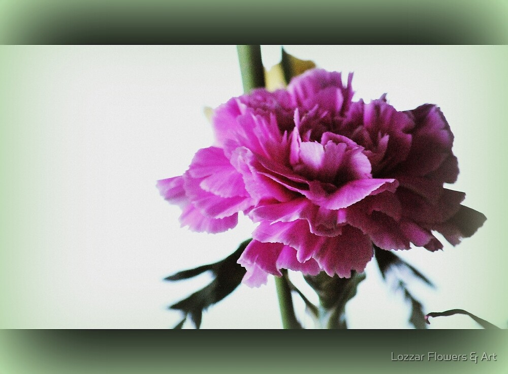 Pink and Pretty By Lorraine McCarthy by Lozzar Flowers & Art