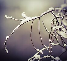 Snowy branches  by candysfamily
