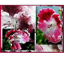 Pelargonium Collage in Pink Photographic Print