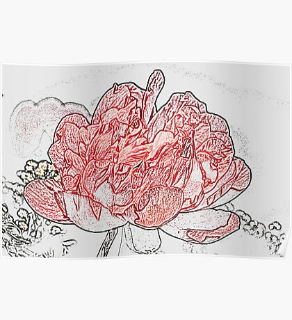 Red Peony, Pencil Poster