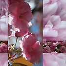 Spring Blossom Collage by Lozzar Flowers & Art