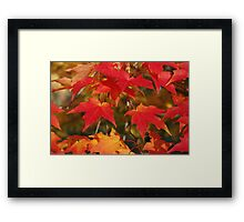 Fiery Autumn Maple Leaves 4966 Framed Print