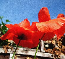 Summer Poppies by domediart