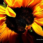 Wrapped in Sunshine by Bunny Clarke