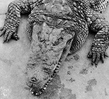 Crocodile show  by Stanciuc