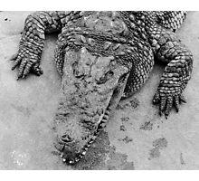 Crocodile show  Photographic Print