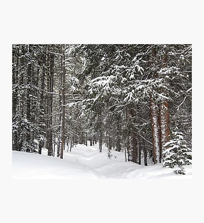 Woods in Winter Photographic Print