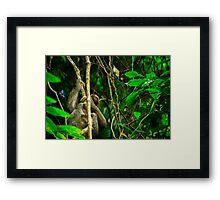 Sloth in the rainforest  Framed Print