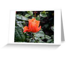 Rose Fellowship bud Greeting Card