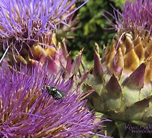 Green Fly in Artichoke by © Kira Bodensted
