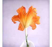 Orange Daylily on a Light Purple Background Photographic Print