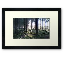 Forest of Mystery Framed Print