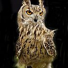 Owl Portrait by John Thurgood