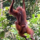 Orangutan mother and baby by Photography  by Mathilde