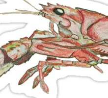 Crawfish Low Res Sticker