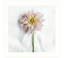 Pink and Yellow Dahlia Art Print