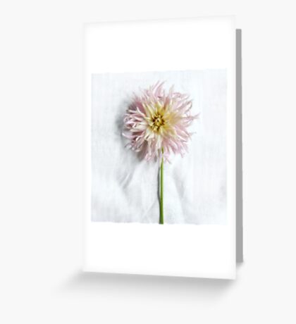 Pink and Yellow Dahlia Greeting Card