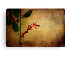 Becomes the Rose Canvas Print