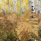 Ferns and Aspens by Eric Glaser