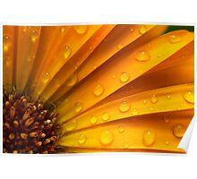 zomers kleuren in zomerse regen Poster
