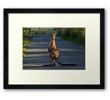 Meanwhile in Australia.... Framed Print