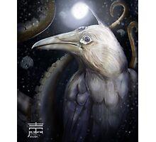 H.P. white raven Photographic Print