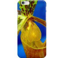 Paphiopedilum Insigne iPhone Case/Skin