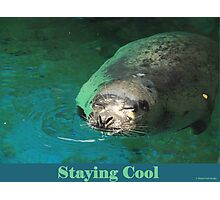 Staying Cool Photographic Print