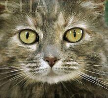 Le Chat by Lynn Starner