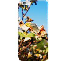 Shiloh Battlefield-227888 iPhone Case/Skin