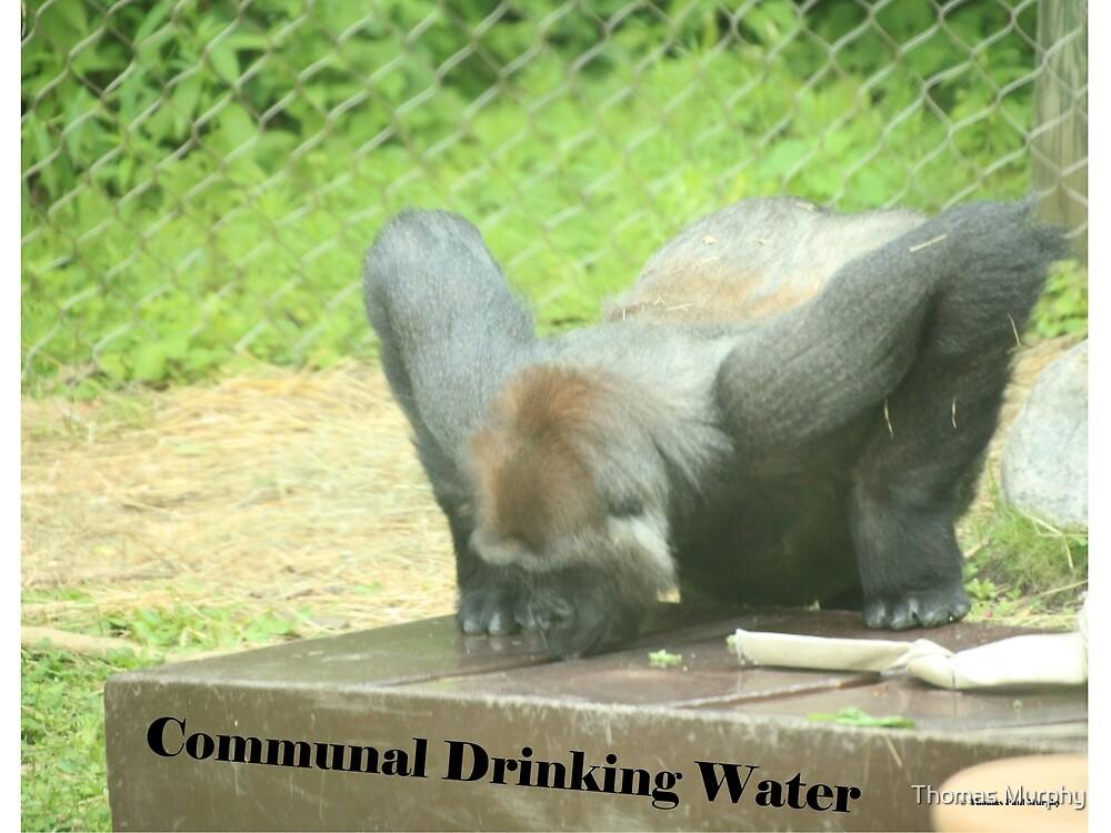 Communal Drinking Water by Thomas Murphy