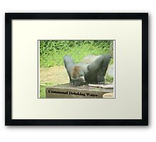 Communal Drinking Water Framed Print